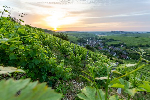 Domaine-famille-bourgeois-visiter-le-domaine-1