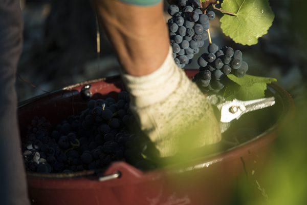 Les-Baronnes-Rouge-Viticulture-et-Terroir